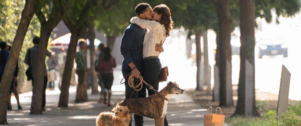 Par amour des chiens